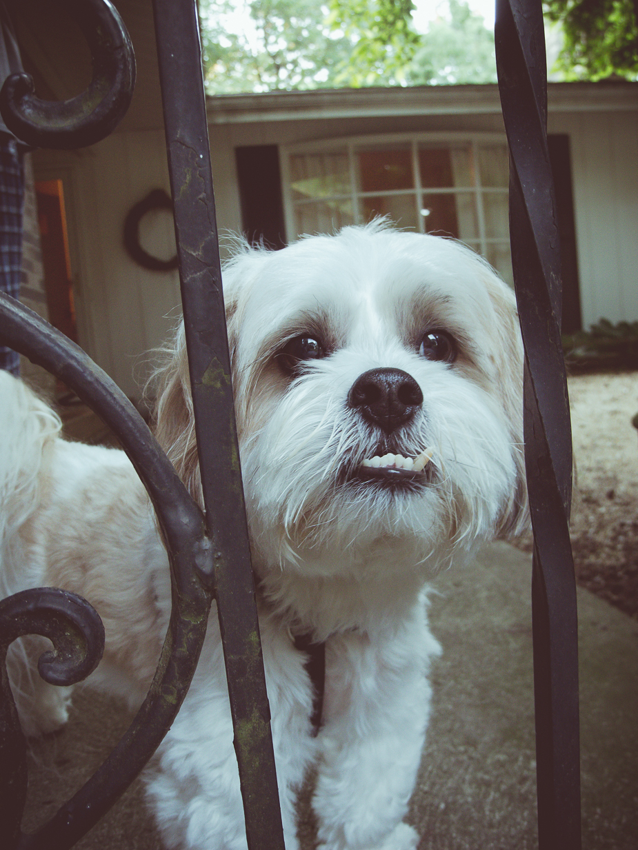 Tucker the neighbor dog